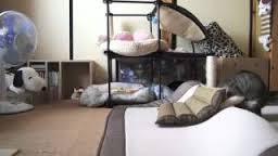 fabula-cat-and-dog